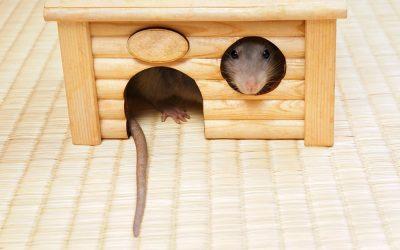 Kako uloviti miša
