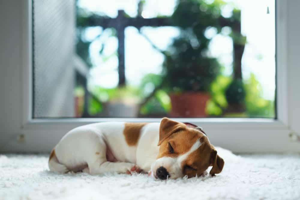 Koliko psi spavaju